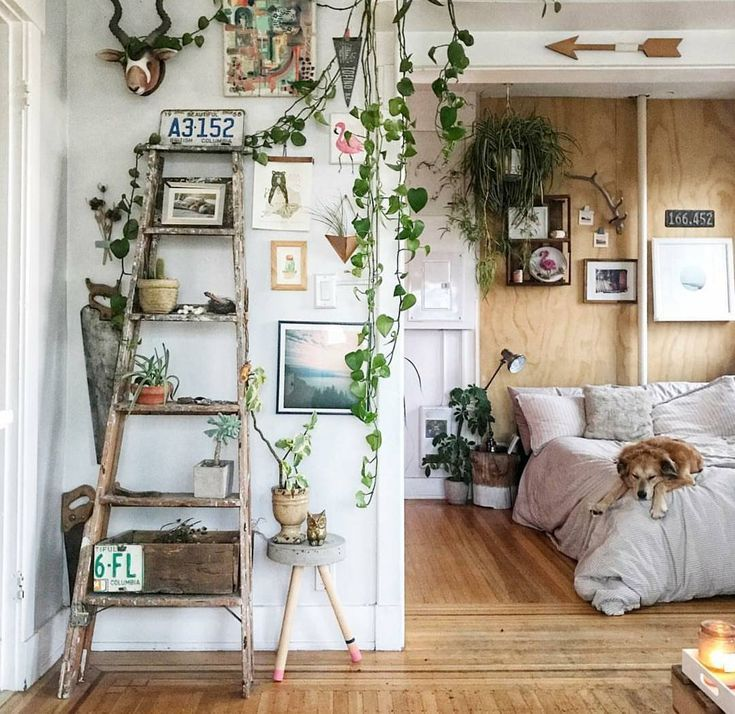 How To Take Insta-Worthy Photos Of Your House Plants -