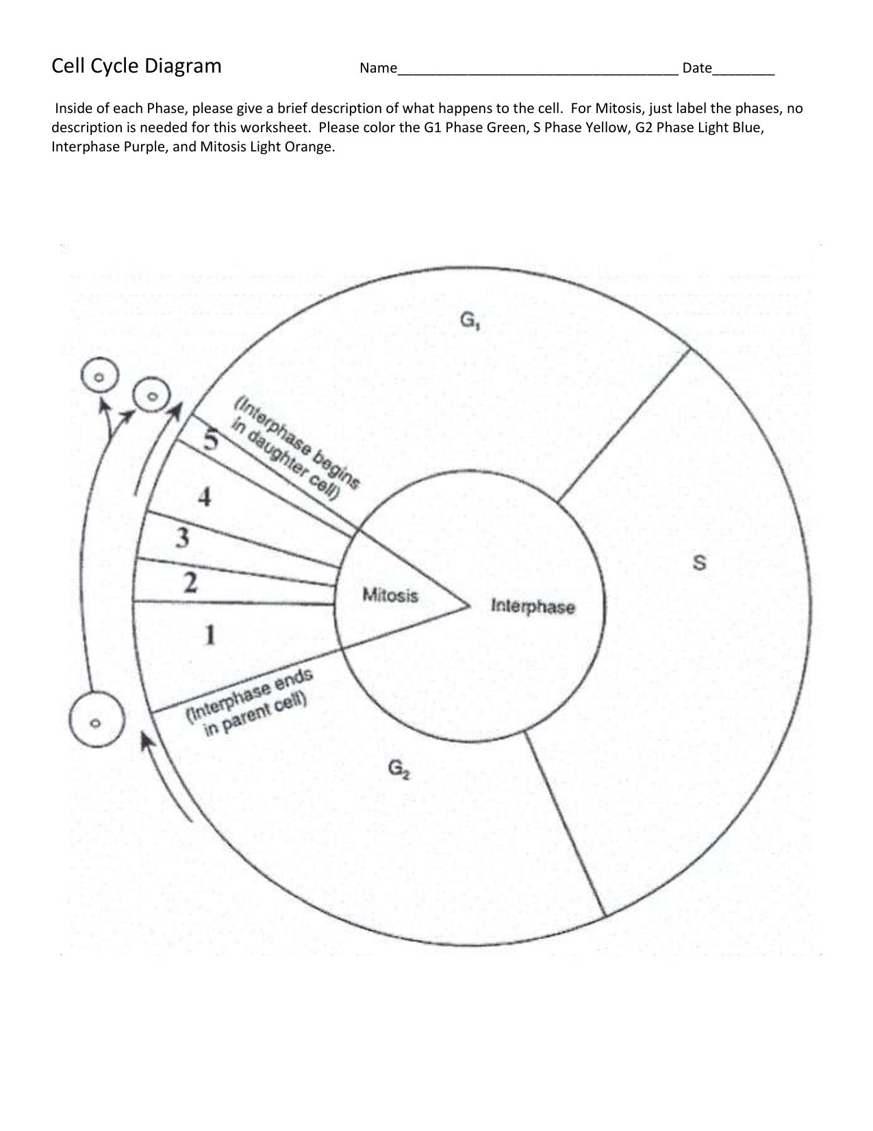 30++ Cell cycle labeling worksheet answers Online