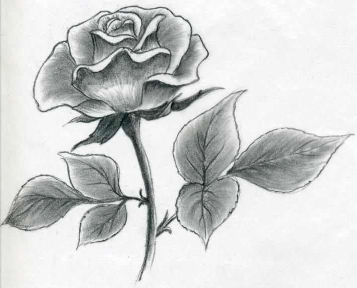 Rose Drawing 5 8605 The Wondrous Pics Roses Drawing Rose Sketch Flower Drawing