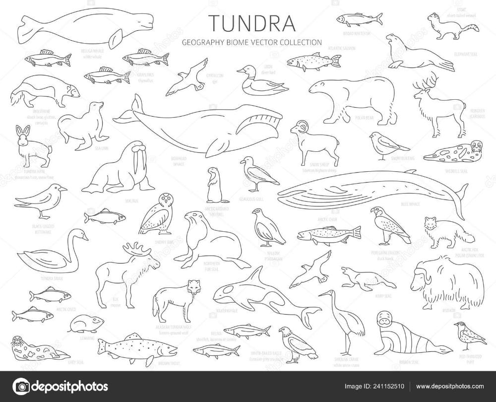 Tundra Biome Simple Line Style Biomes Arctic Animals Illustration