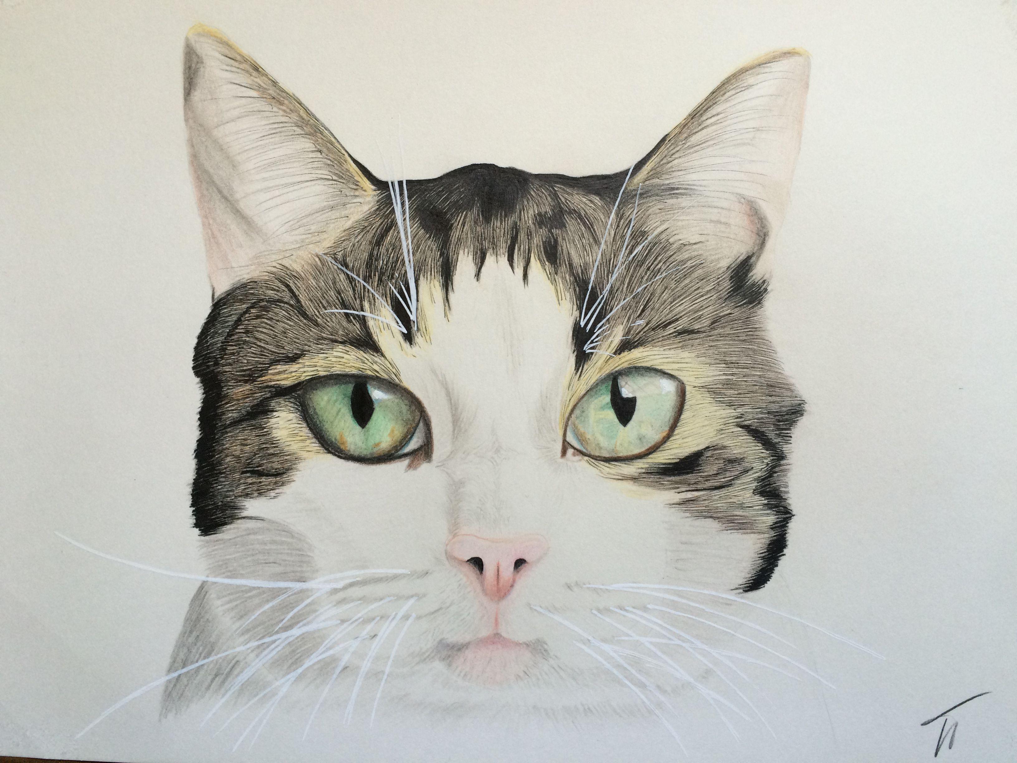 cat catface catportrait pet petportrait petface portrait