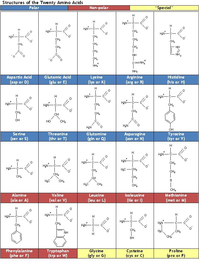 List Of Amino Acids  Google Search  Nerd Life