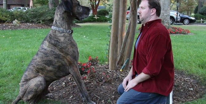Man S Best Friend Not So Fast Top Article Doritos Dogs