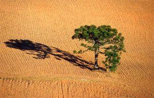 Águas de Pontal: Resta 0,8% de floresta com araucárias e 0,1% de ca...