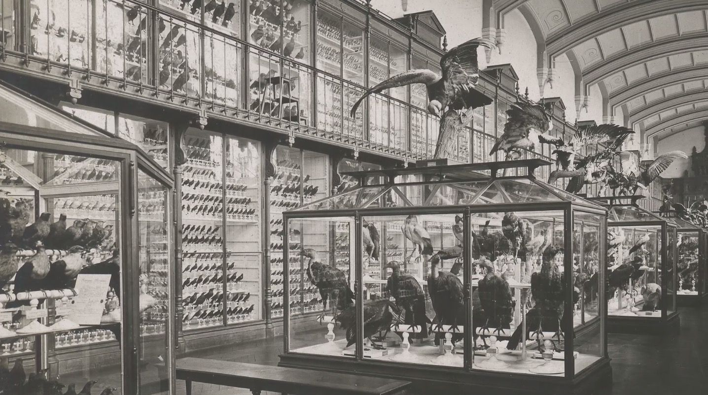 A Giant Cabinet Of Curiosities In Paris Cabinet Of