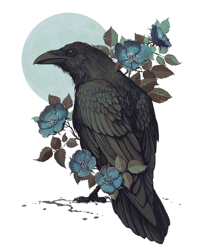 Pin by Juls on Witcher | Raven art, Crow art, Drawings