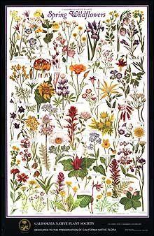 California spring flowers emily and rebeccas tattoo collective california spring flowers mightylinksfo