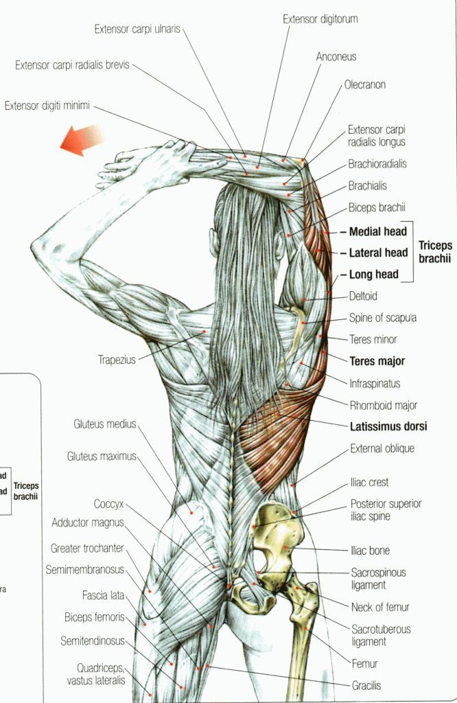 Stretching: How to Stretch the Tricep Muscle #Flexibility #Fitness ...