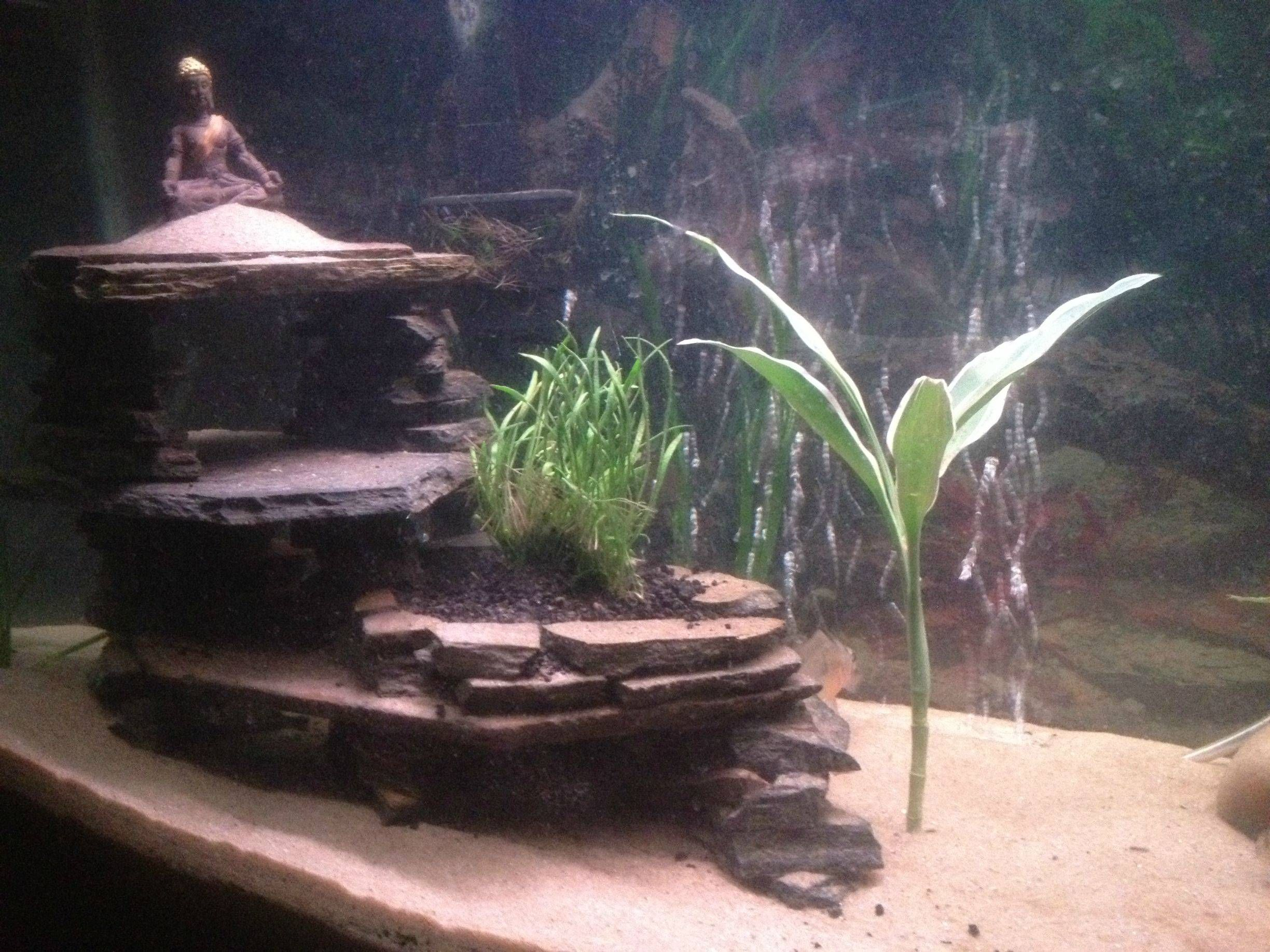 my diy slate cave aquarium advice aquarium forum