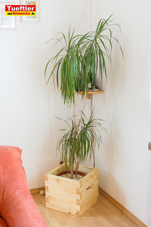 Sehr große oder hohe Pflanzen brauchen einen festen Stand ...
