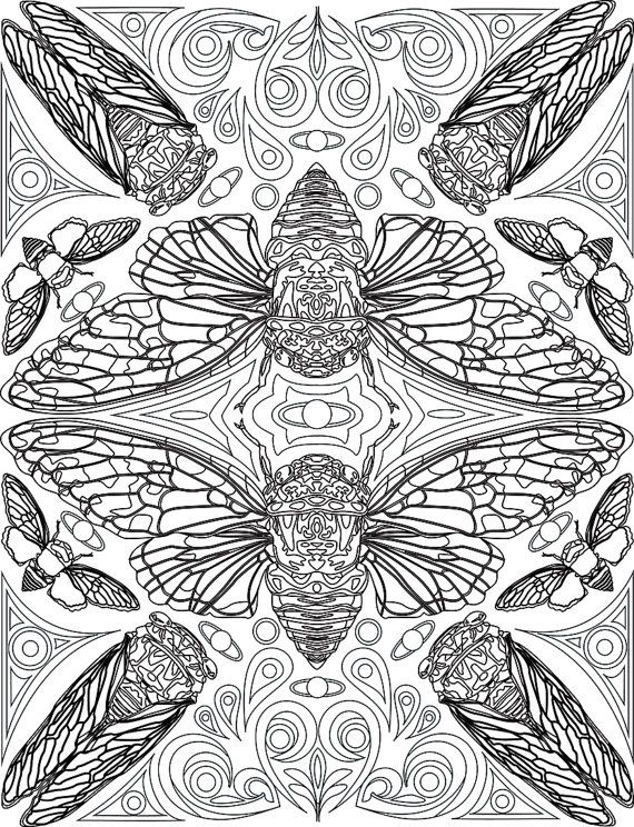 Cicada Coloring Page By Bigredsharksstudio On Etsy Colorful