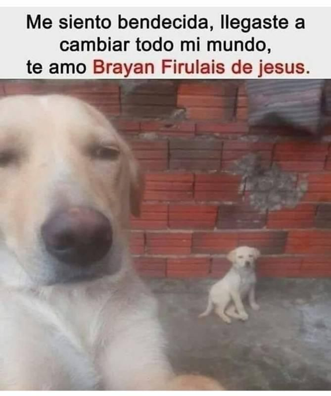 Memesespanol Chistes Humor Memes Risas Videos Argentina Memesespana Colombia Rock Memes Memes Divertidos Memes Graciosos Memes De Perros Chistosos