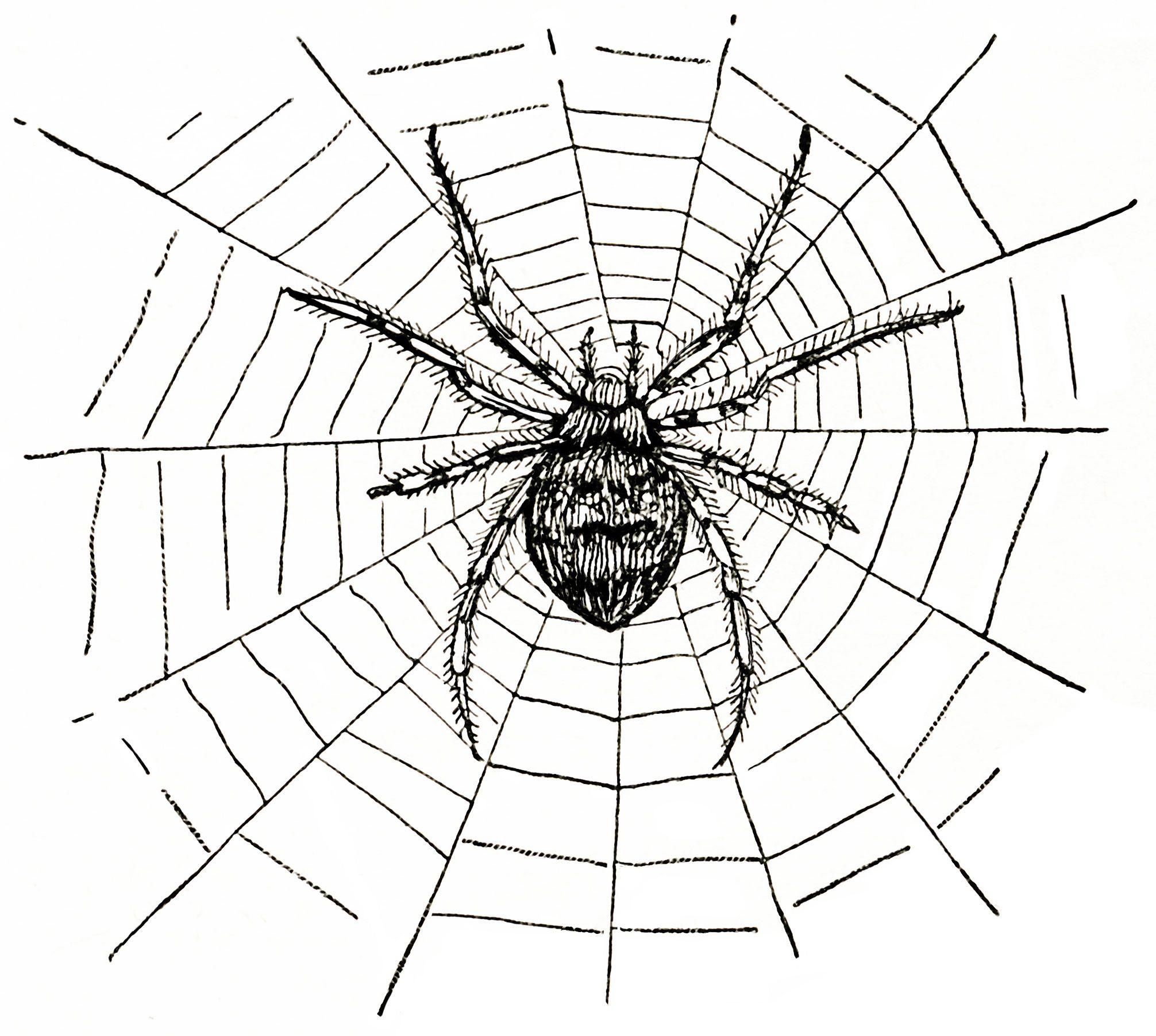 Old Design Shop ~ free digital image: spider and spiderweb | Clip ...