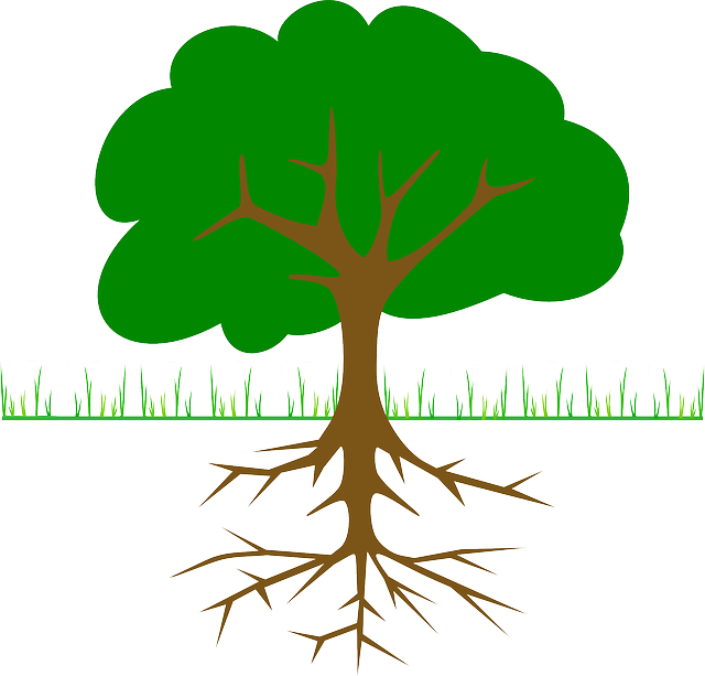 Free Image On Pixabay Tree Branches Root Trunk Science Enrichment Roots Interactive Science
