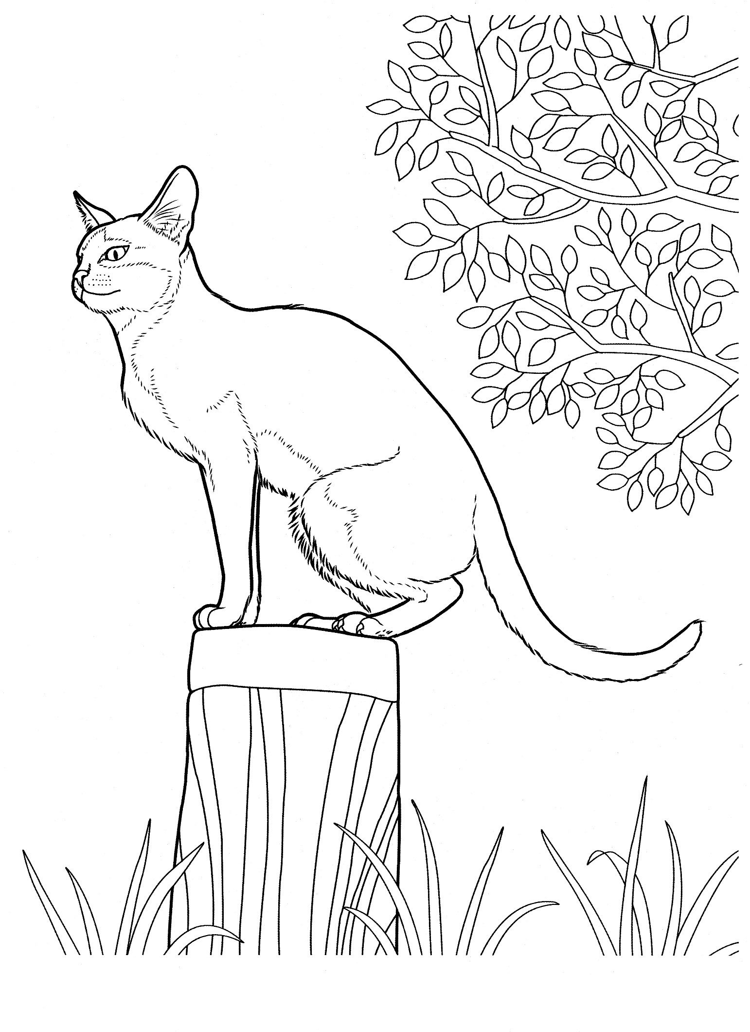 Cat 12 Cats Coloring Pages For Teens And Adults Cat Coloring
