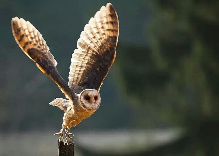 Facebook, owl page