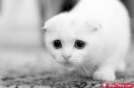 ¡ Que ojos!
