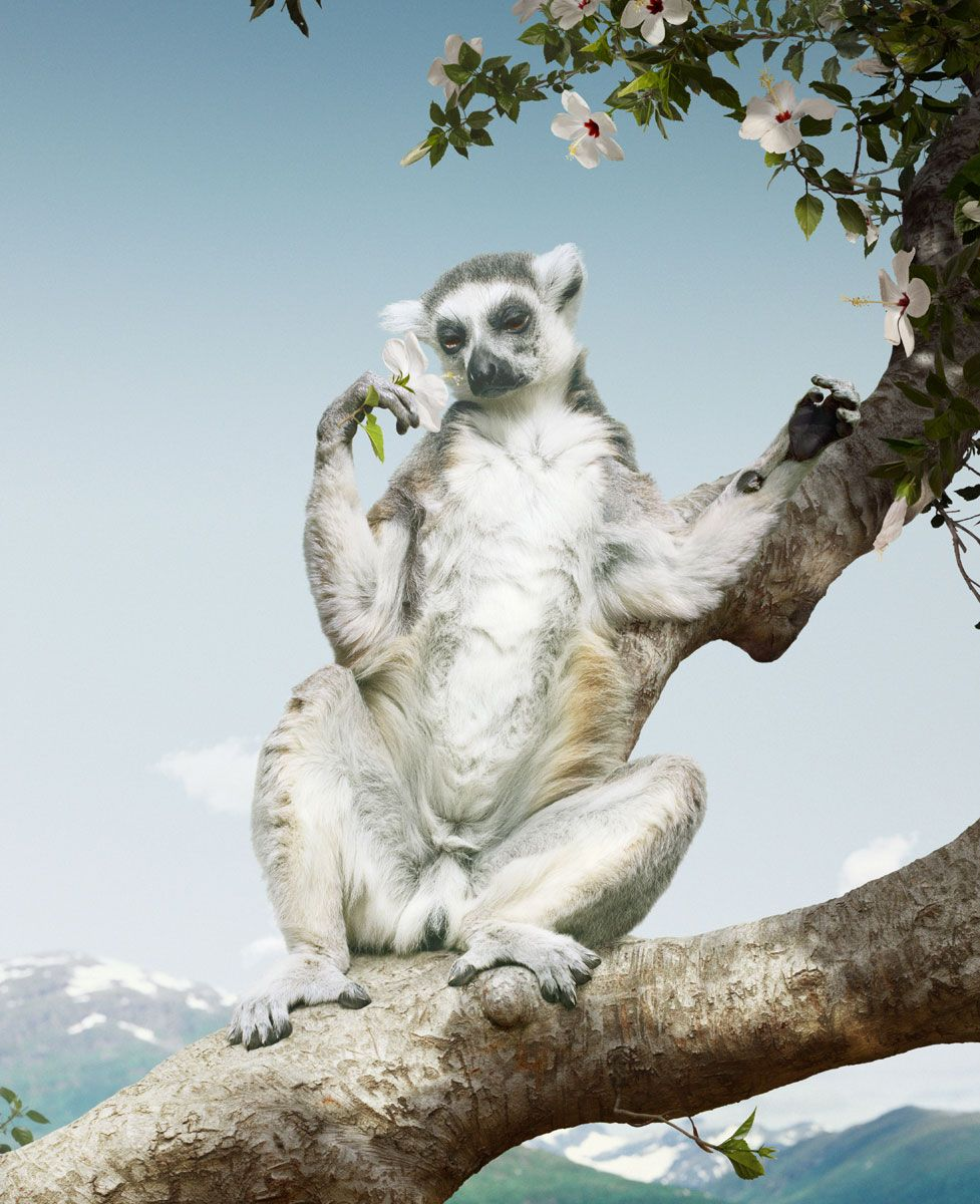 Picture of a constructed image of a lemur perched on a tree, sitting upright holding a flower