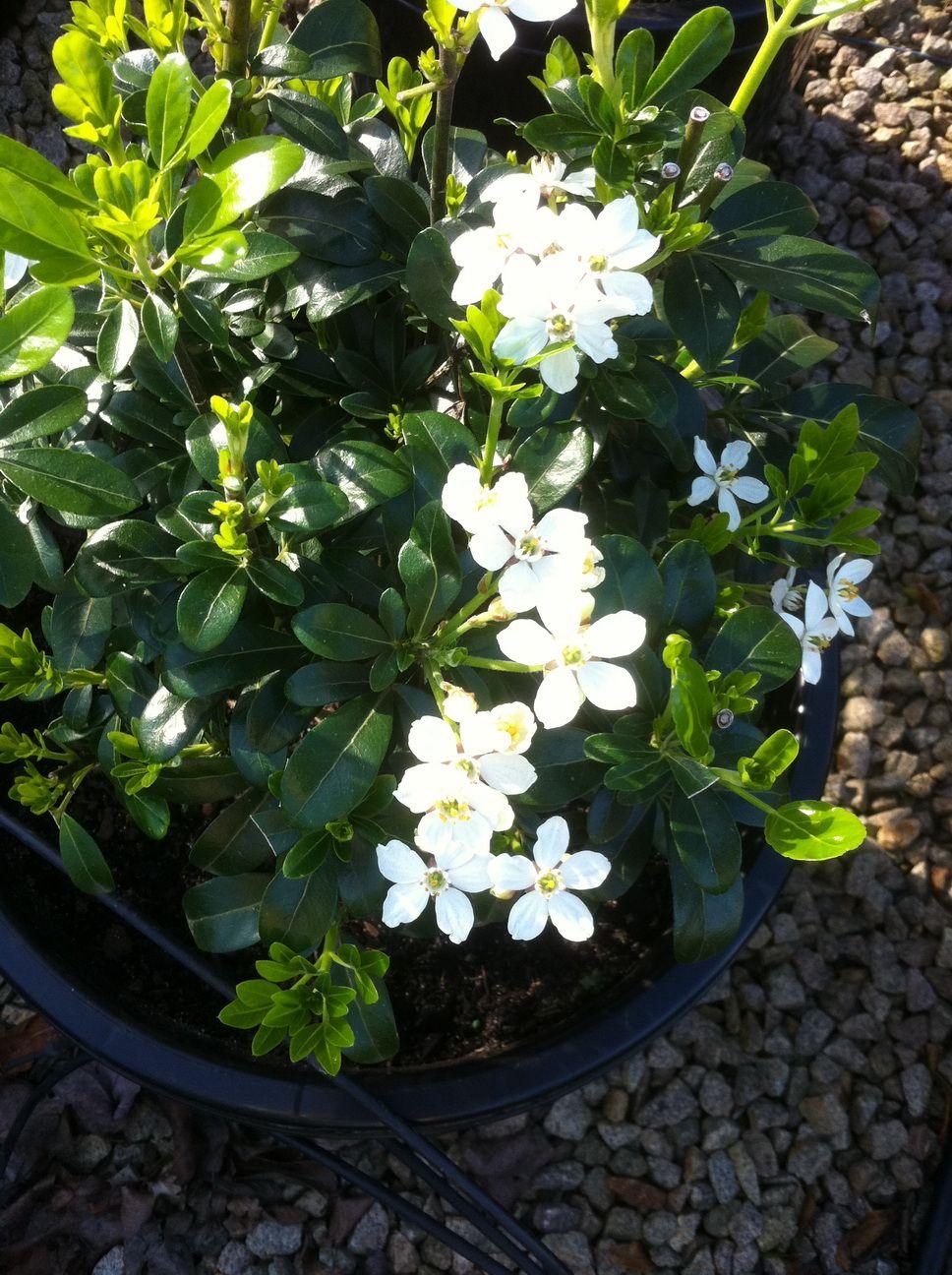 Our Range Garden Hardware Outdoor Gardens Plants