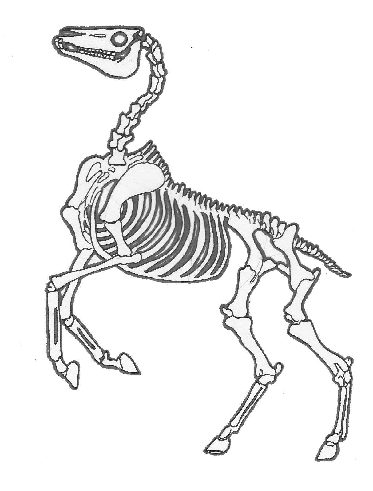 horse skeleton | halloween in 2018 | pinterest | horses, drawings