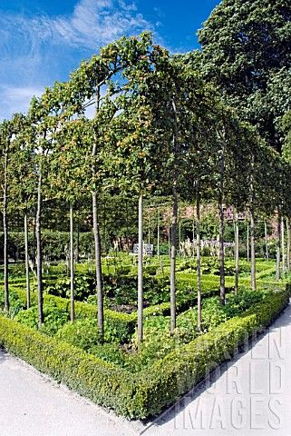 Rc6164 Espaliered Crab Apple Trees Alnwick Garden Asset
