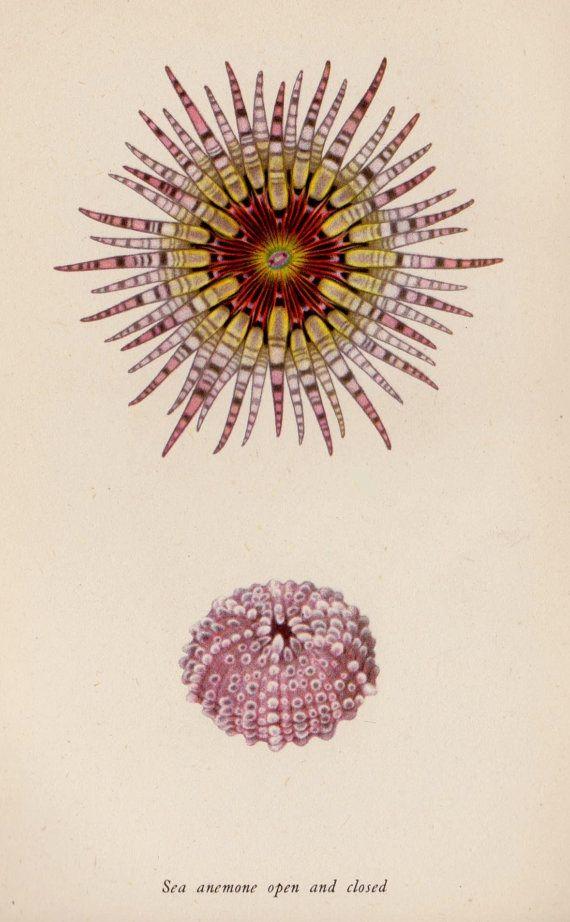 Sea Anemone Tattoo : anemone, tattoo, Beautiful, ANEMONE, Print, Beach, House, Decor, Ocean, Gallery, Wall,