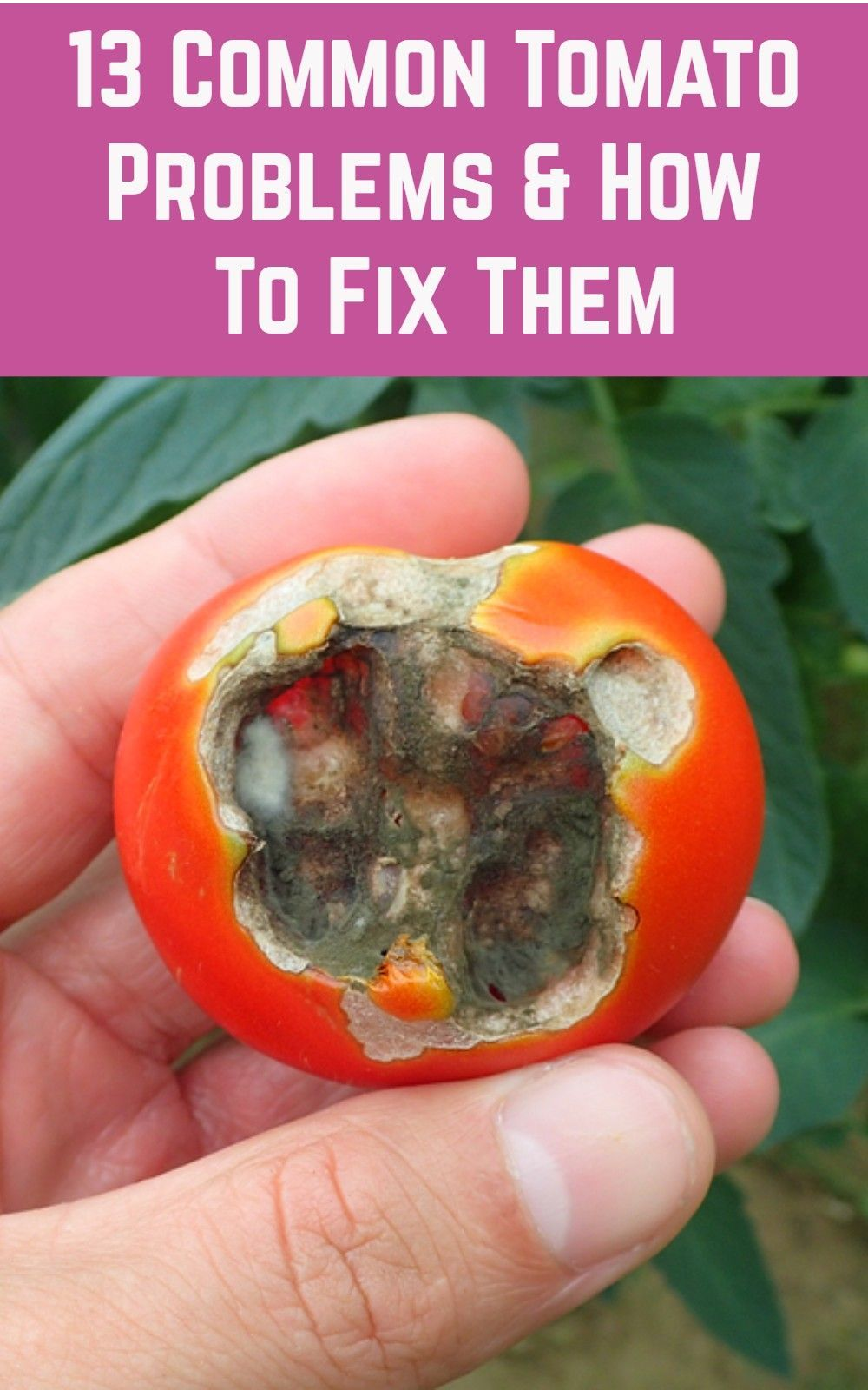 diy drip irrigation for tomatoes