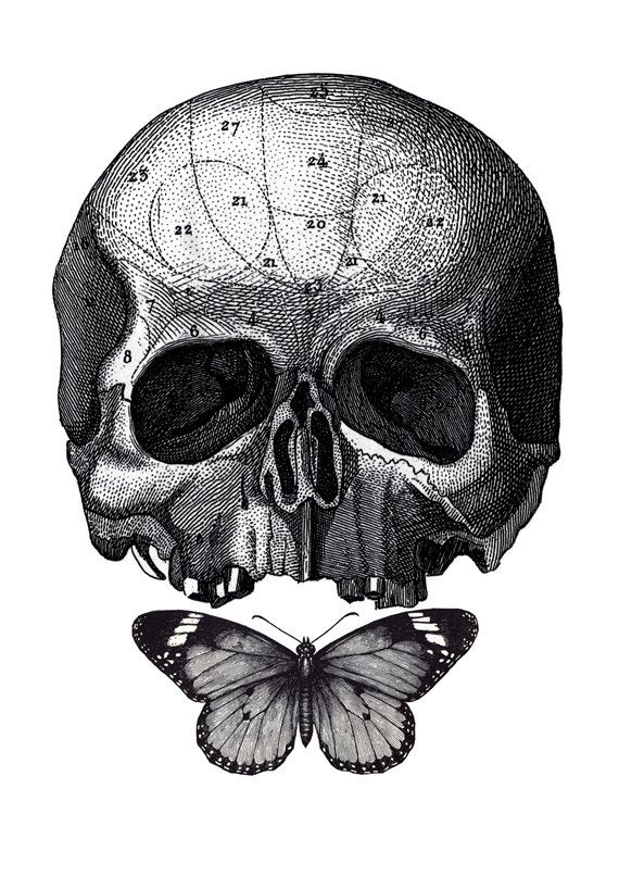 Anatomical Skull With Butterfly Art Print Vintage By
