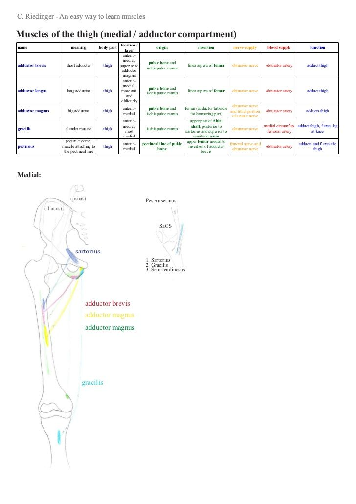 An easy way to learn lower limb muscles | ATR 361 | Pinterest ...
