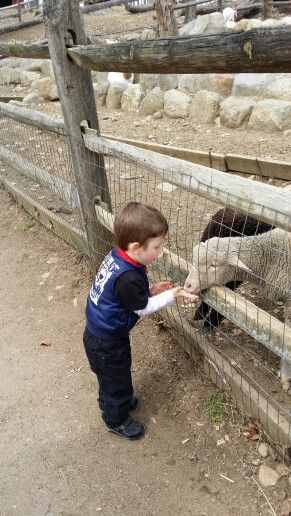 Feeding the animals.
