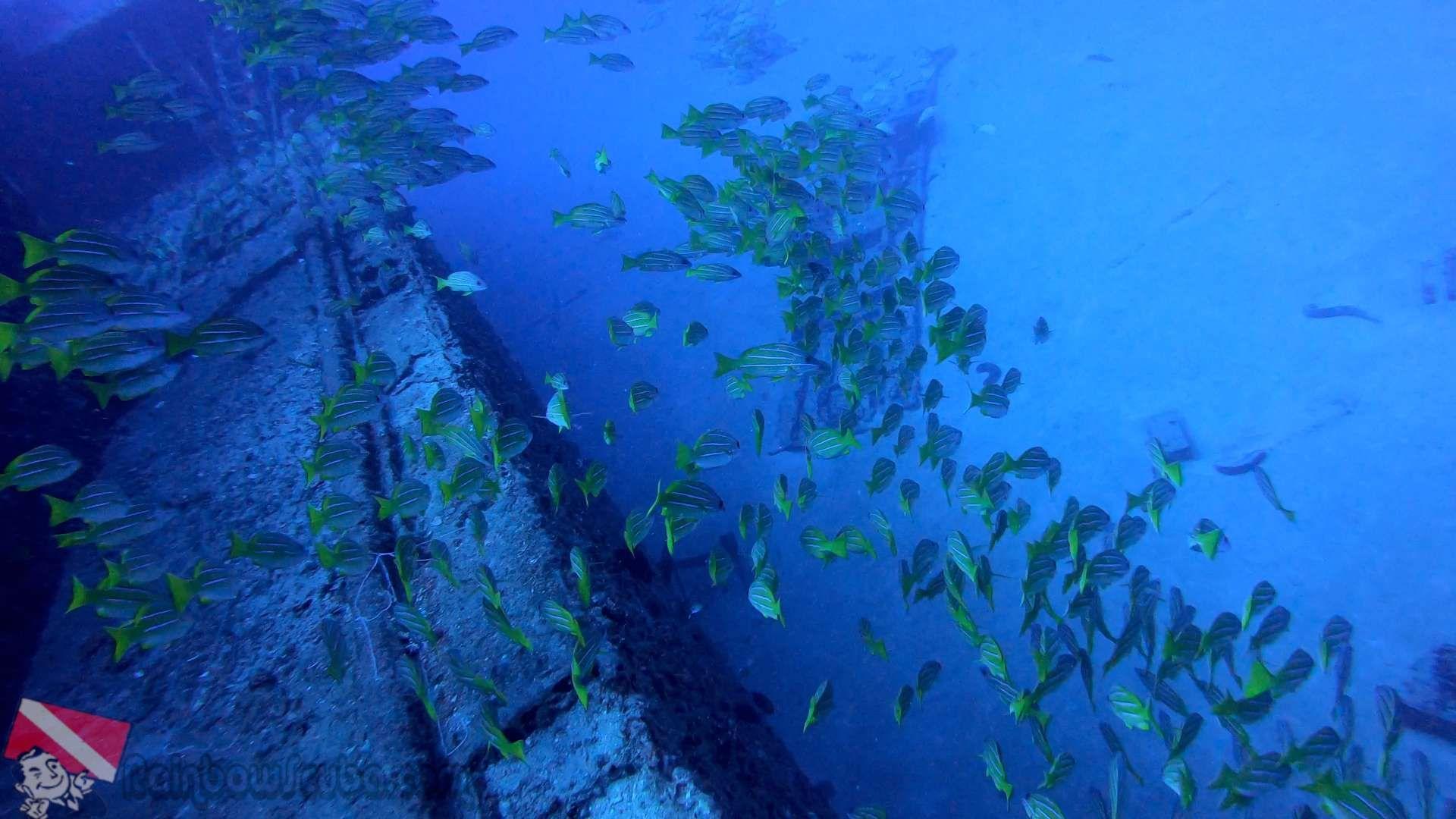 PADI certification course Scuba diving lessons, Padi
