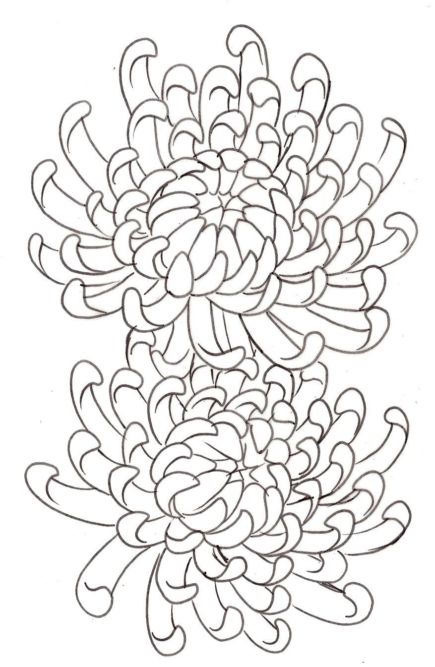 Tattoo Flash And Sketches By Metacharis On Deviantart Chrysanthemum Flower Tattoo Chrysanthemum Drawing Flower Drawing