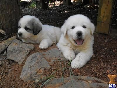 Happy Nat L Puppy Day Puppy Day Cute Puppies Puppies
