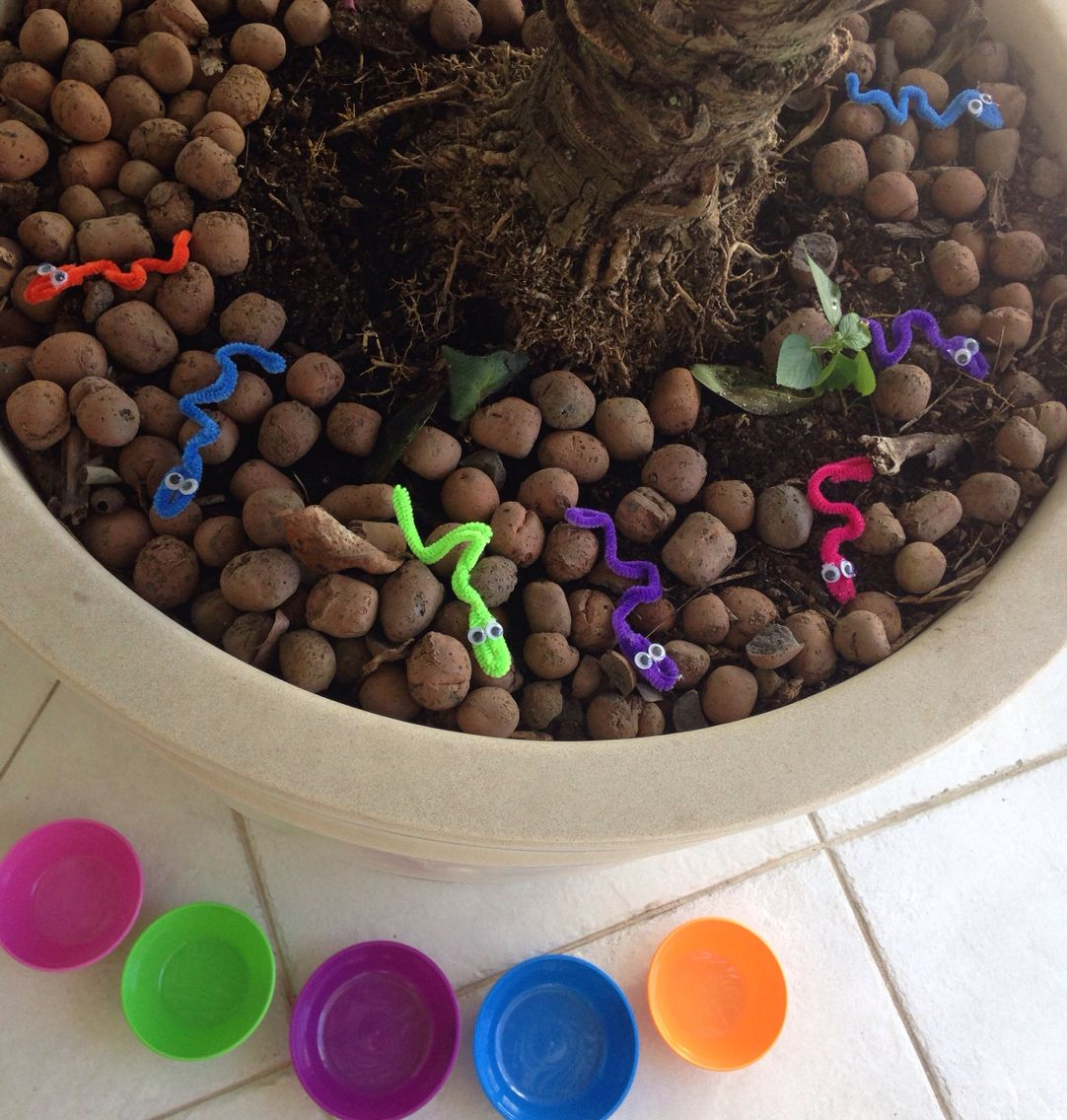 Pegar as minhocas na terra e coloca-las no potinho da sua respectiva cor.