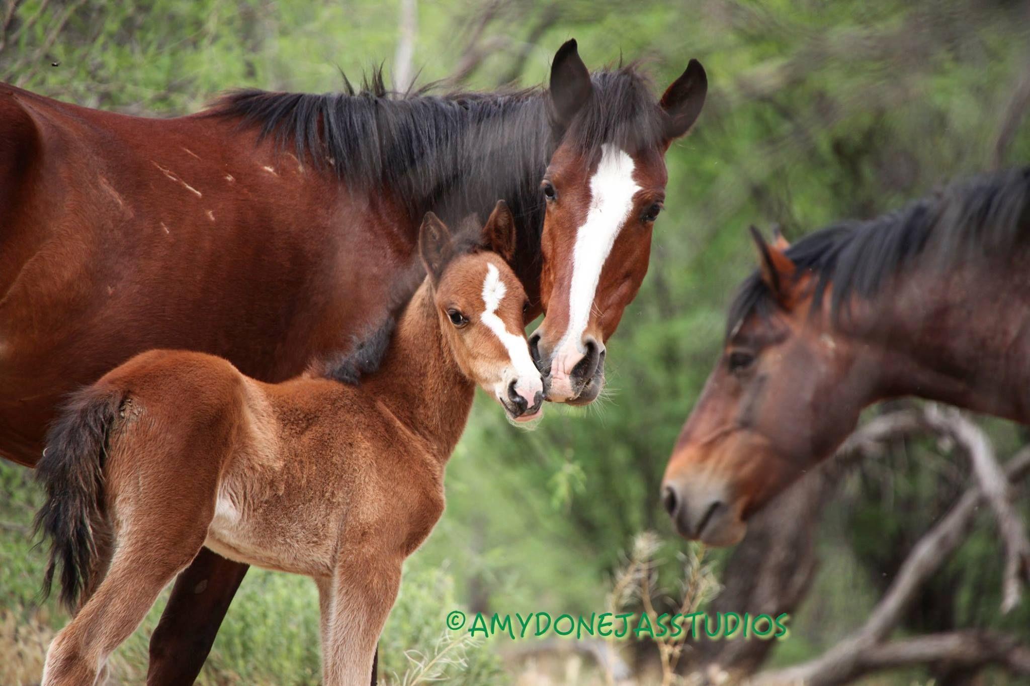 Wild horses - 'Family' © amydonejasstudios