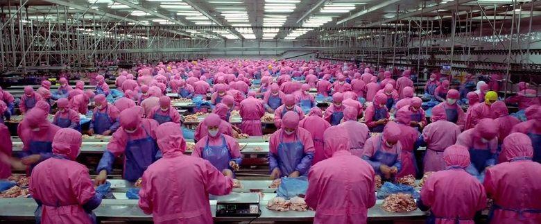 A chocante indústria da produção de carnes