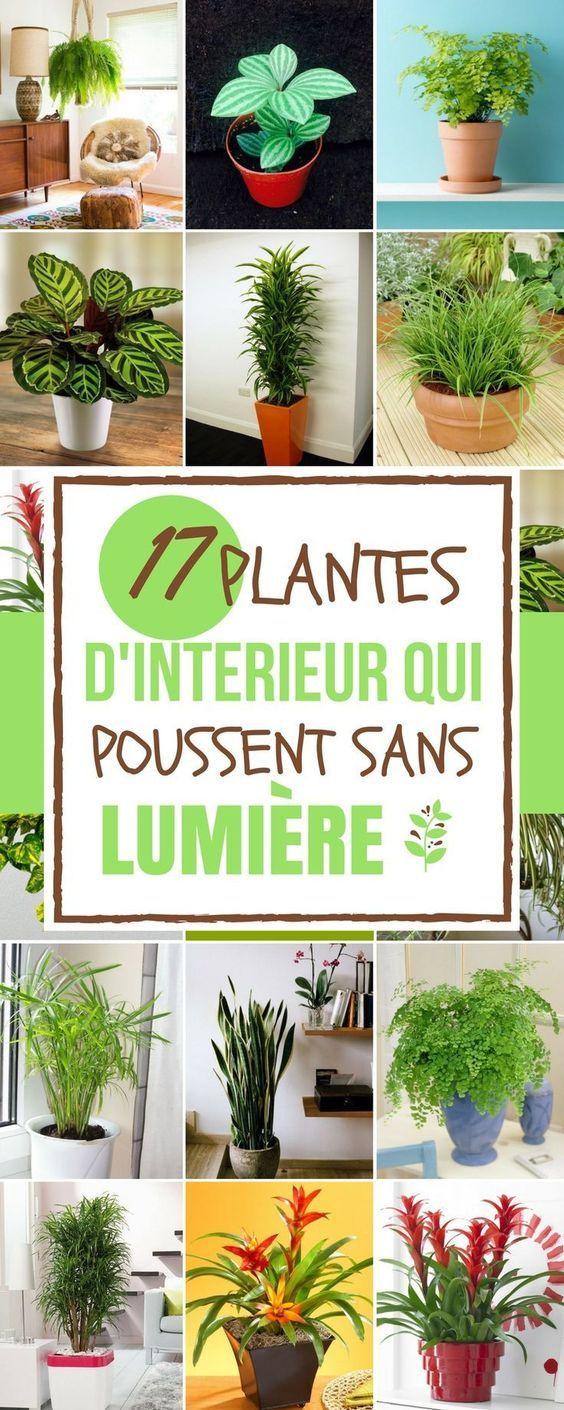 17 id es de plantes qui poussent sans lumi re du soleil jardinage plante interieur jardins. Black Bedroom Furniture Sets. Home Design Ideas
