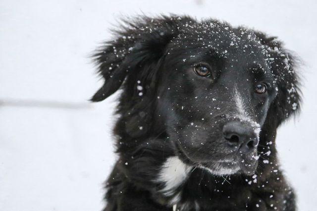 Traumdeutung Hund Hundepfoten Hundehaltung