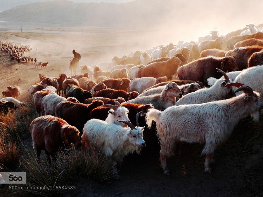 Morning stroll by songzhujutx. Please Like http://fb.me/go4photos and Follow @go4fotos Thank You. :-)