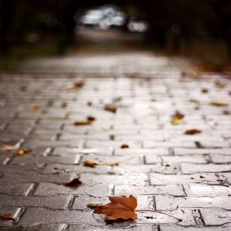 Life is going by recepgulec on deviantART Autumn