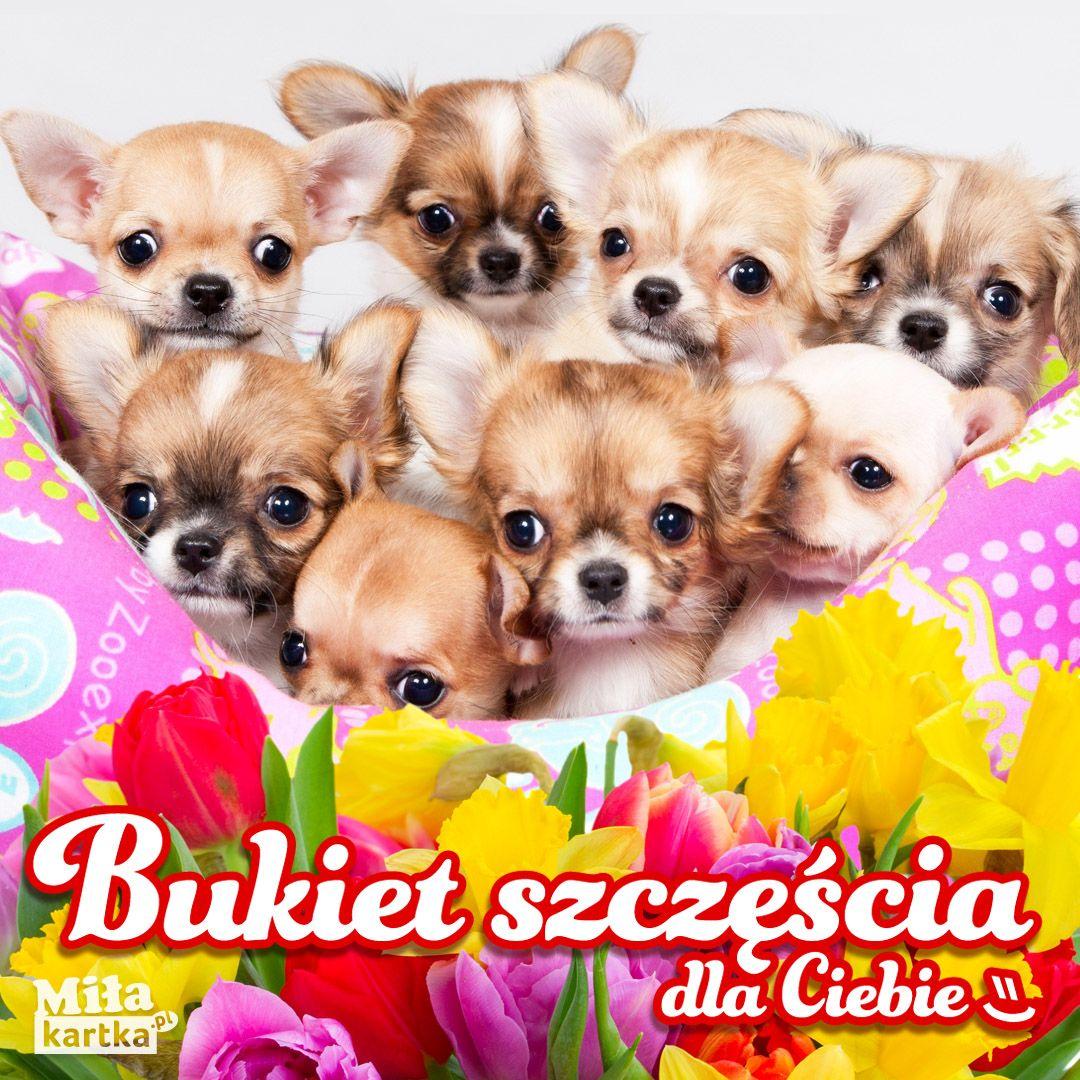 Bukiet Szczescia Kotki I Pieski Szczeniaki Kotki Kartki