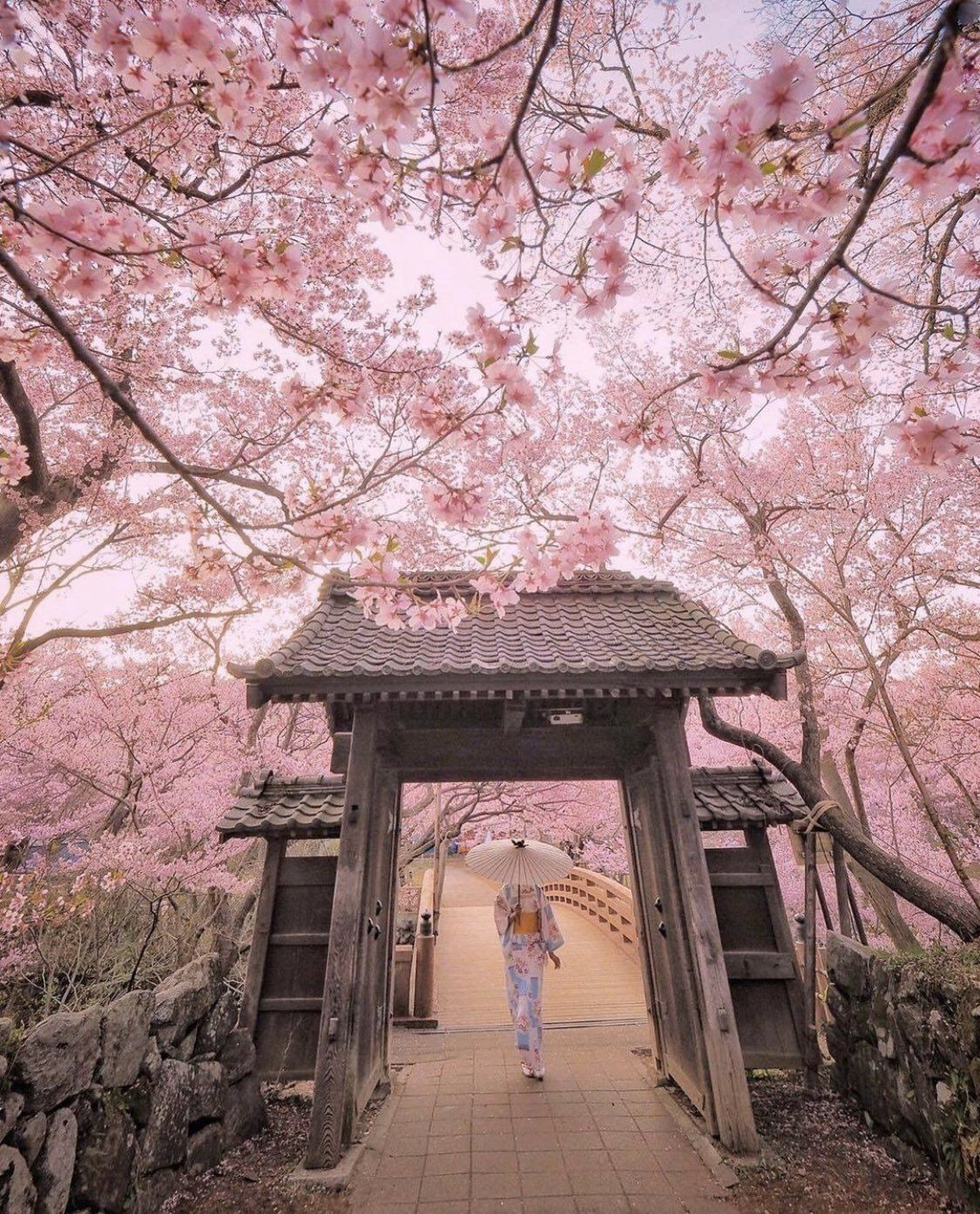 11 11 On Twitter Cherry Blossom Japan Cherry Blossom Wallpaper Nature Photography