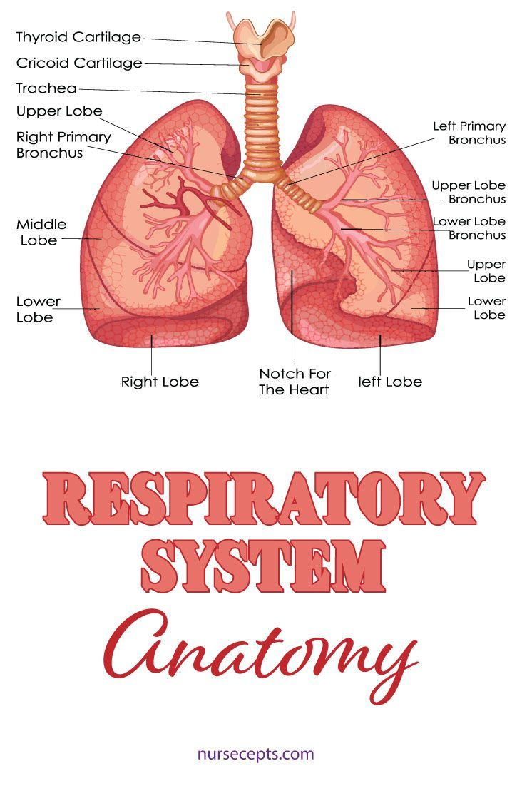 9 Facts About The Respiratory System Nursing Students Should Know. #medicalstudents