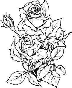 Roses L-108 | ADULT COLORING PAGES ROSES | Rose coloring ...