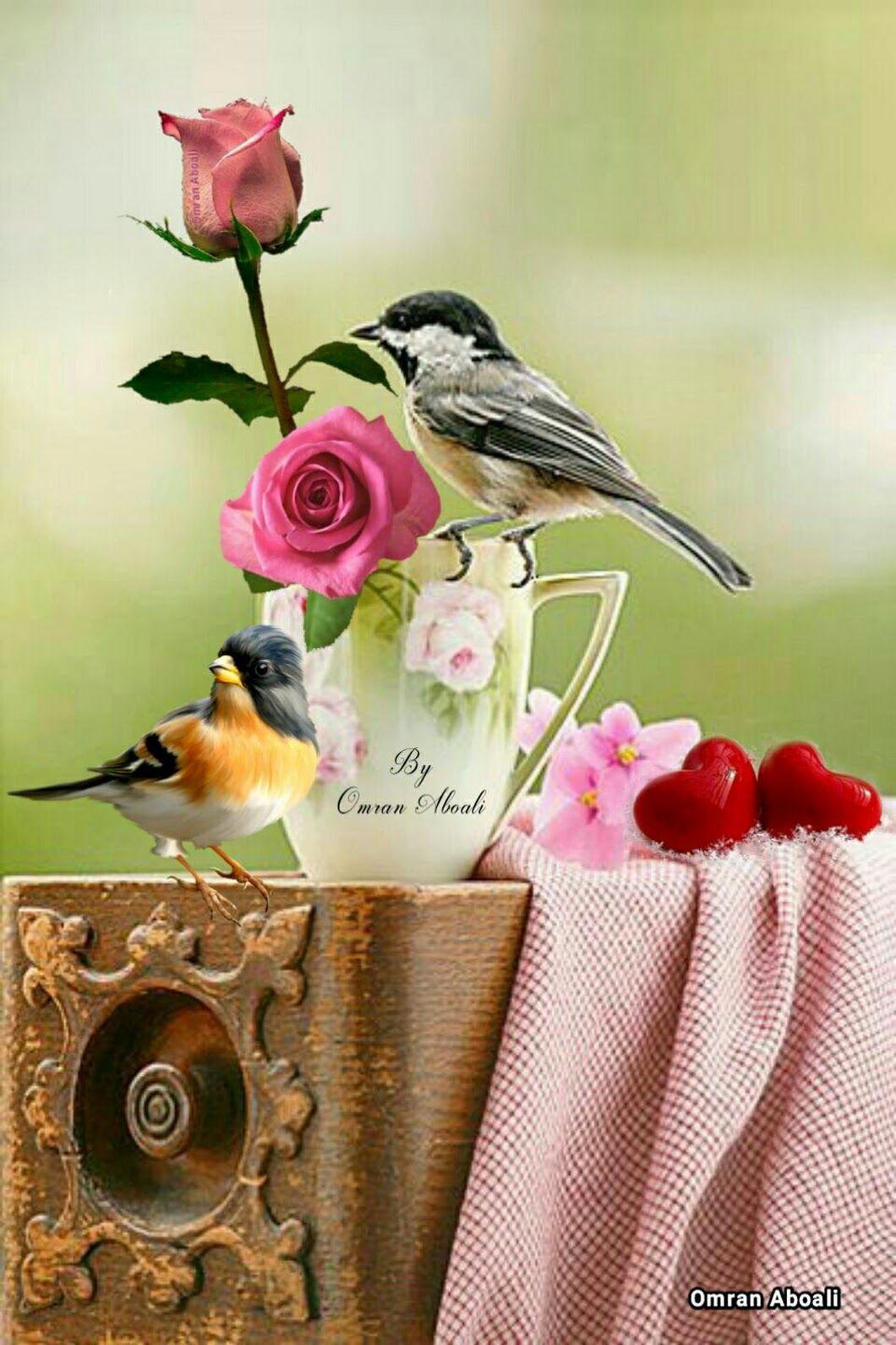 مساء الجمال Beautiful Birds Purple Wallpaper Love Flowers
