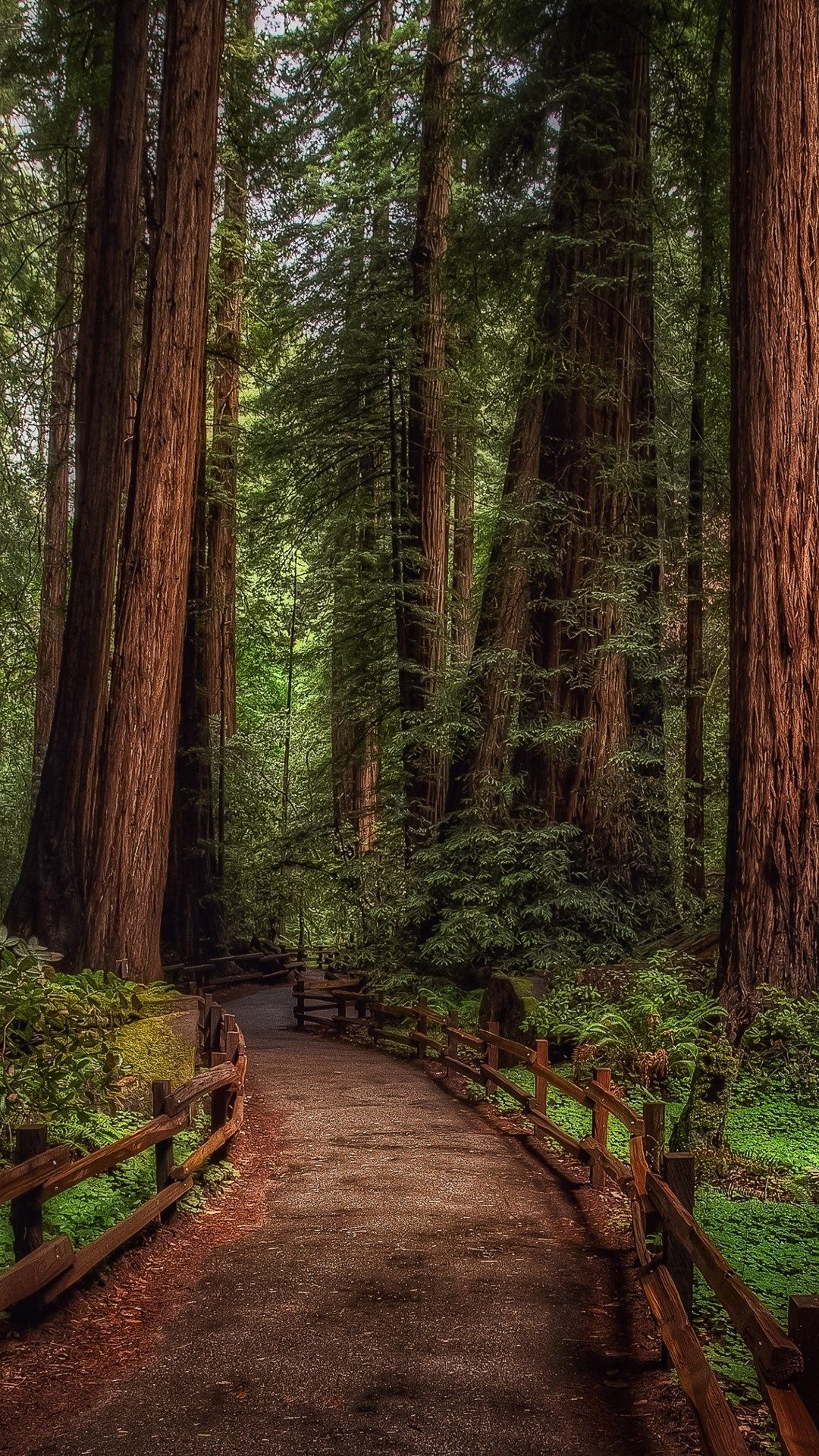Tap And Get The Free App Nature Dark Forest Green Wood Road Path Wild Hd Iphone 6 Plus Wallpaper Best Places To Camp Redwood Forest Forest Wallpaper