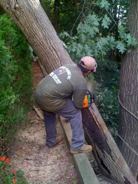 Tree Service Tree Service Paterson Tree Trimming
