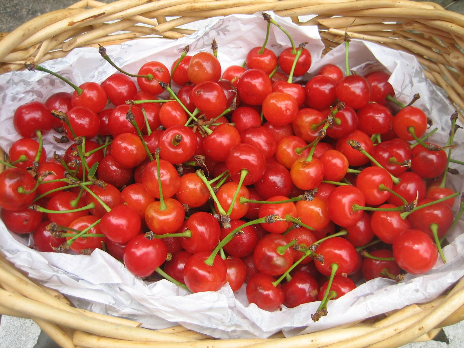Beautiful sour cherries  One of my chores was picking them for my