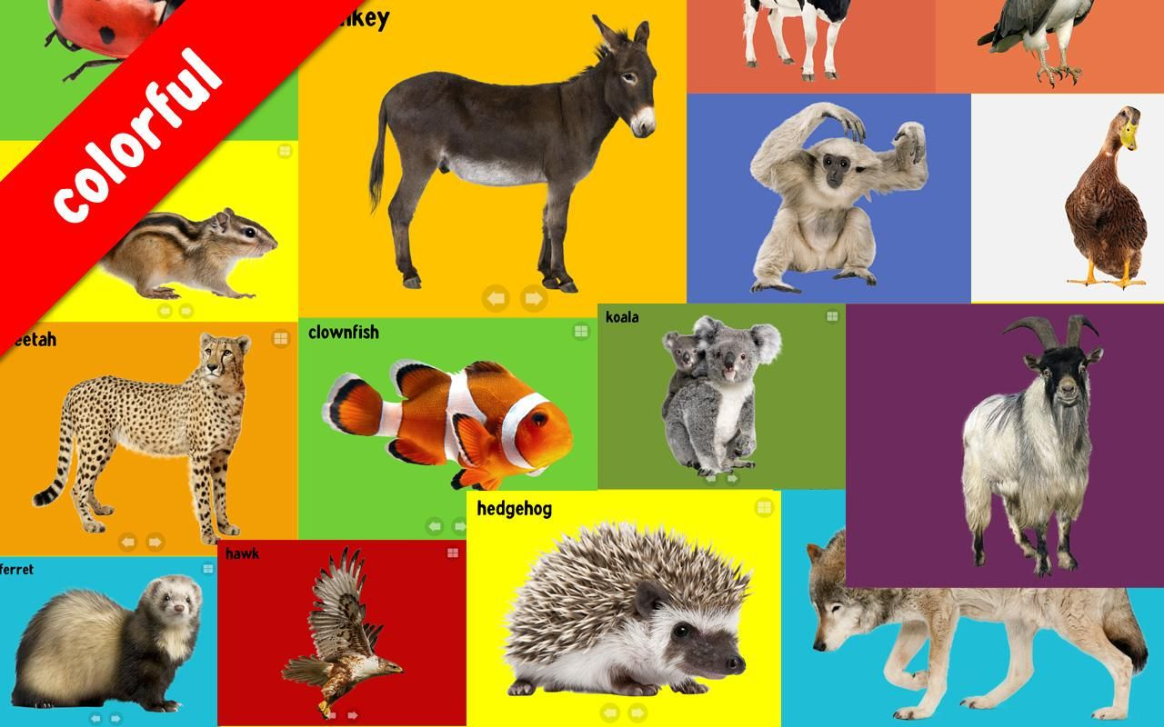babyanimalsonewordchords Animal learning, Wild