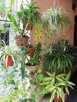 Use Hanging Plants To Give Your Tropical Garden The Vertical